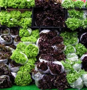 DSCN2661 wall of lettuce resize